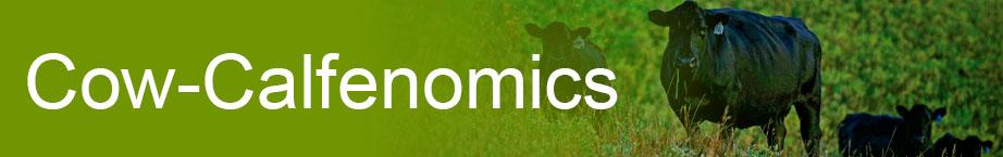 Cow-Calfenomics