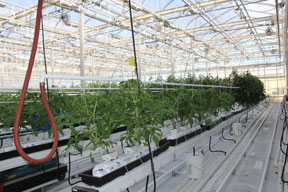 Poly Production Greenhouse with hanging gutters