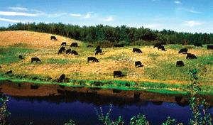 Livestock and Livestock Genetics