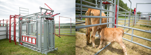 Steel Livestock Handling Equipment