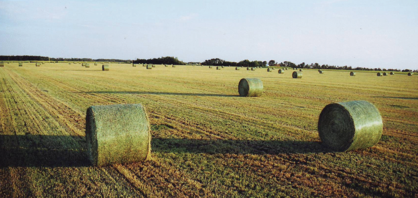 Compressed Hay