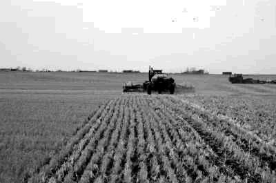 Figure 1. Uniform planting in standing stubble