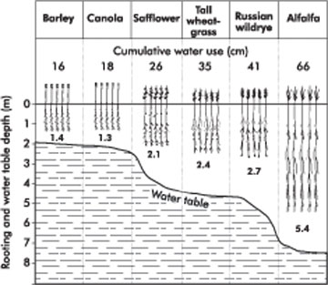 Figure 1. Cumulative water use and rooting depth of crops over a four-year period