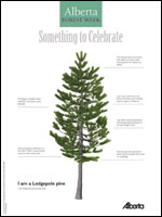 Lodgepole Pine Poster
