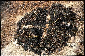 Figure 1. Dividing a pile manure into four sections